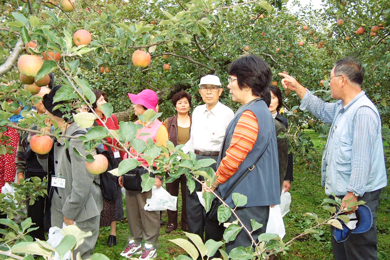 观光苹果园