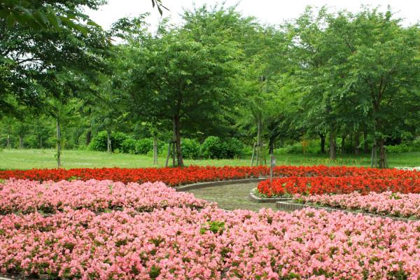 富士见湖公园的秋海棠田地