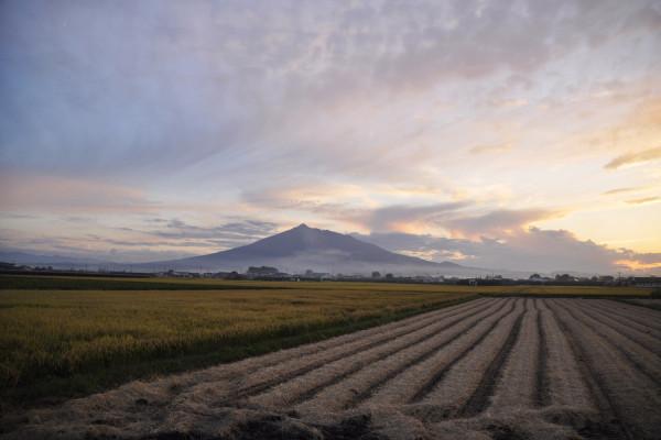 岩木山和收割后的稻田