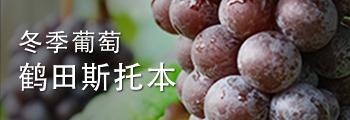 Winter Grape Tsuruta Steuben